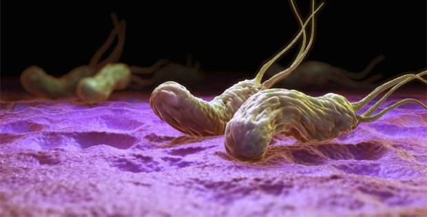 Virus hp dạ dày là gì