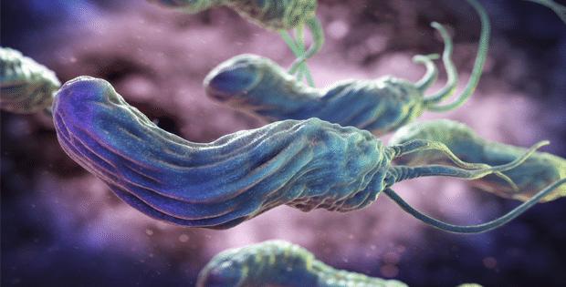vi khuẩn hp có trị được không